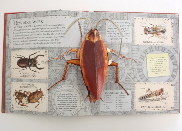 bugs_spreada