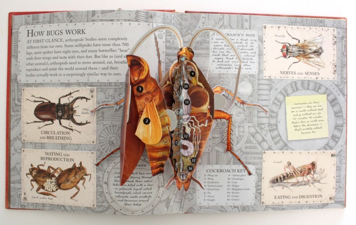 bugs_spreadb